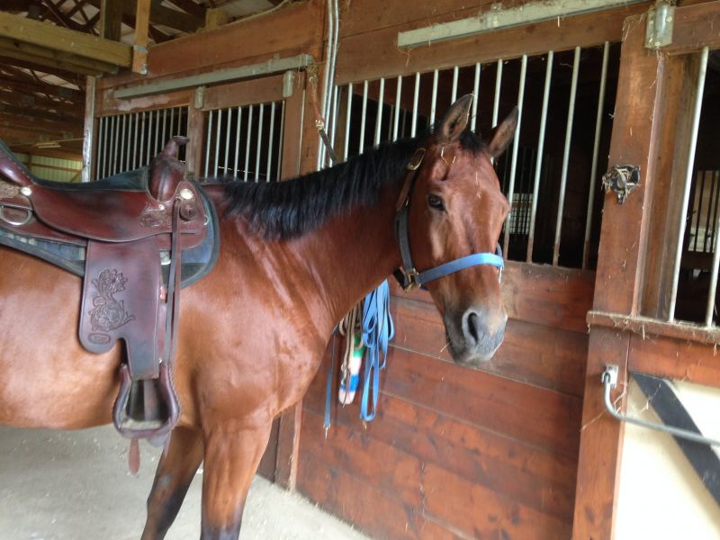 Handsome QH gelding for lease