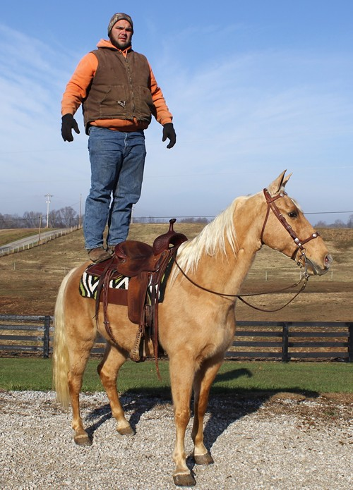 Golden Palomino Gelding registered pleasure saddle.