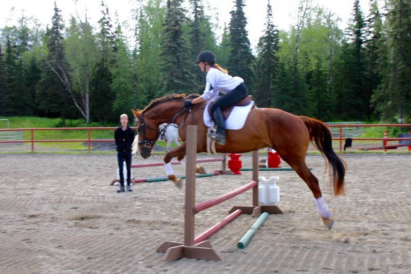 Excellent Dressage/ Jumper / Cross country