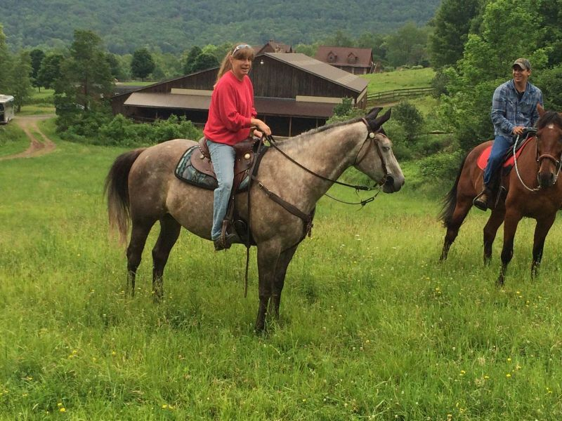 Quater Horse Barrel Horse For Lease