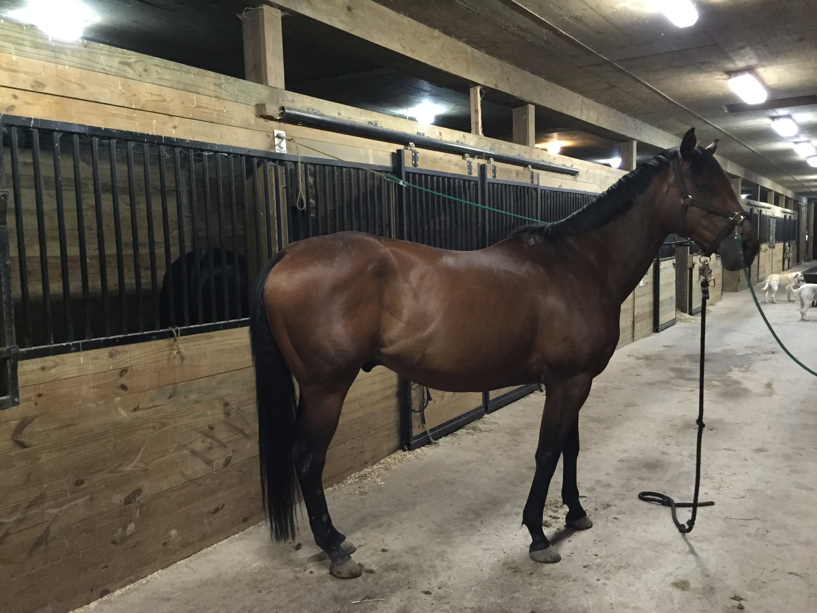 OTTB FOR LEASE IN GREEN BAY WI