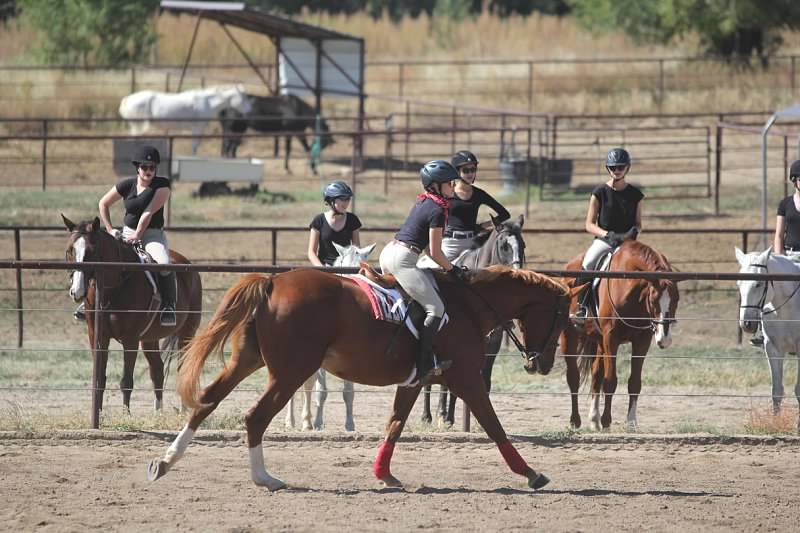 English Horse Lease - Colorado Springs - Black Forest