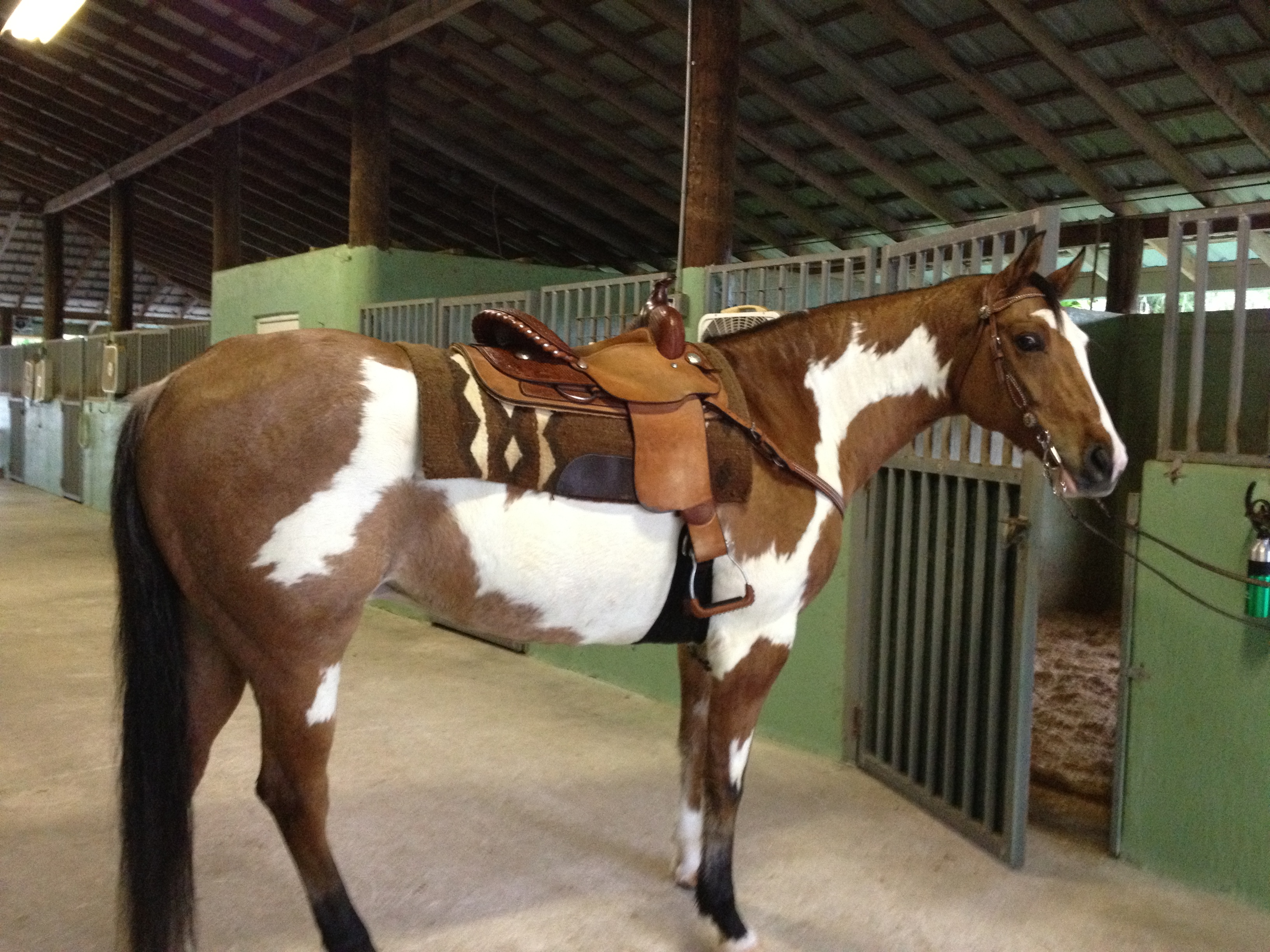 Gentle Horse for Partial Lease ($140/mo)
