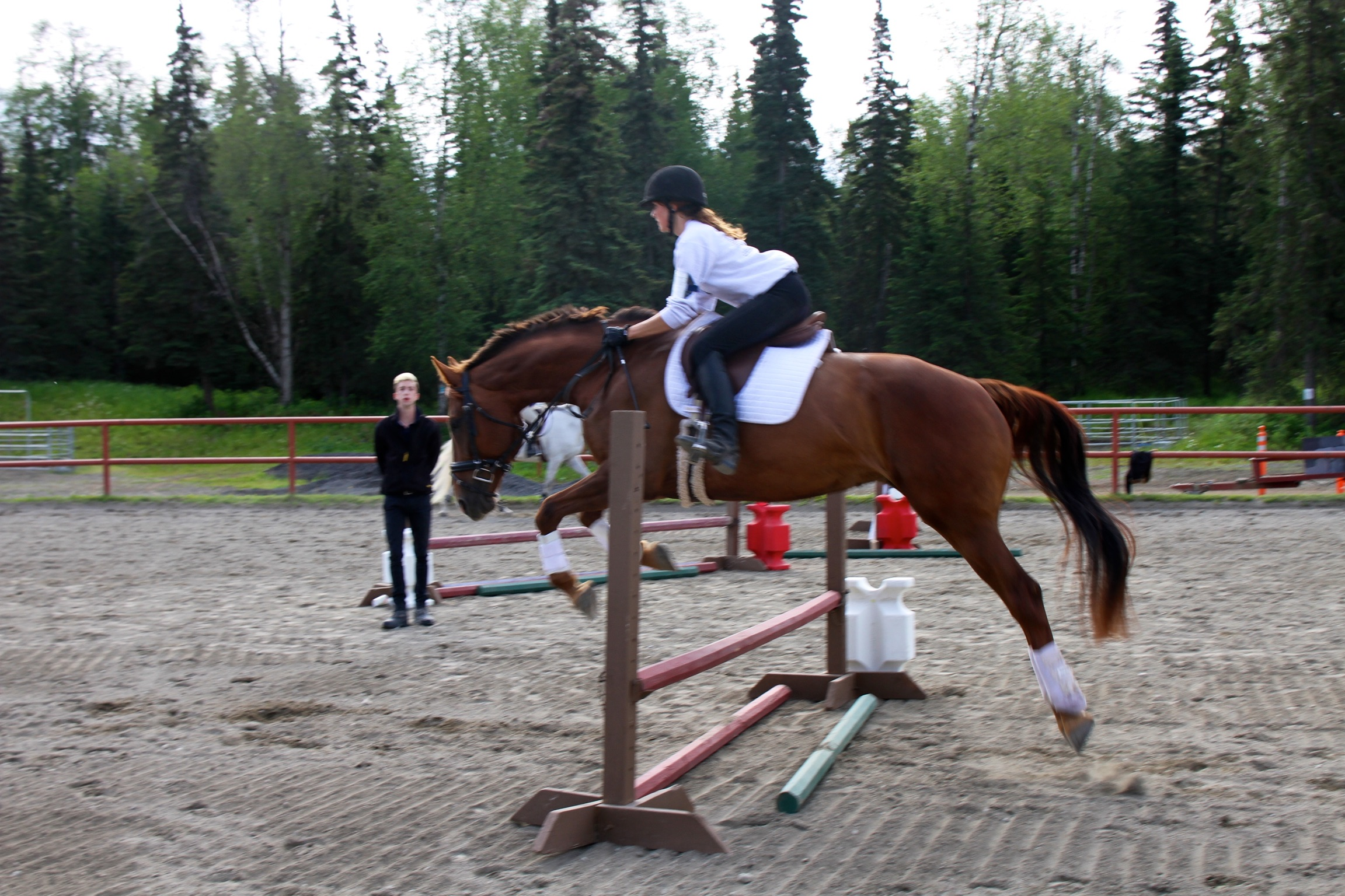 Incredible Dressage/Jumping Warmblood