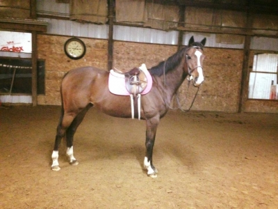 Beautiful OTTB Gelding for lease