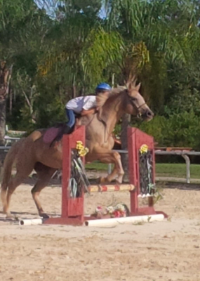 Palomino Mare for lease