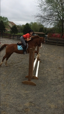 Cute 14.2h pony for lease!