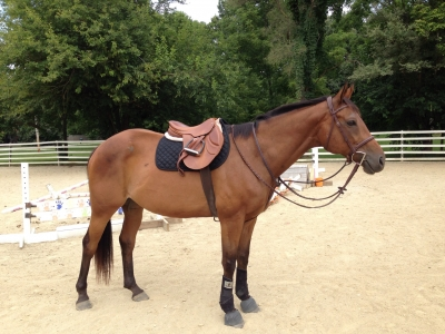 Hunter/jumper Thoroughbred for Partial Lease