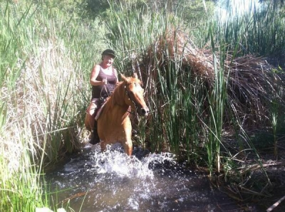 Gentle Trail Quarter Horse for Lease