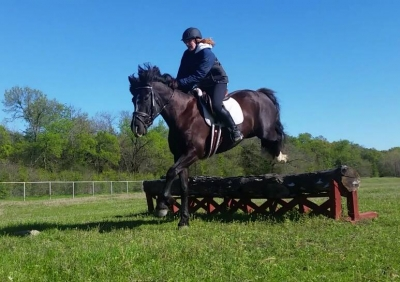 Horse Available for Partial Lease East Dallas