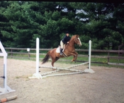 QH Mare for Lease