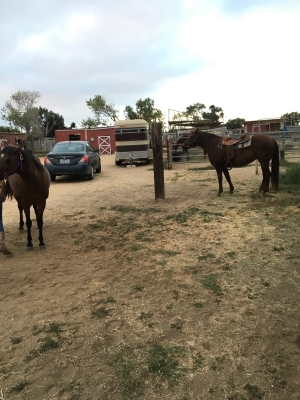 Horse/pony for Lease