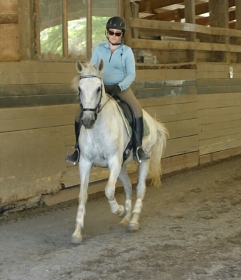 Dressage horse for half-lease
