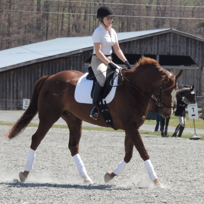 Gelding for Half-Lease