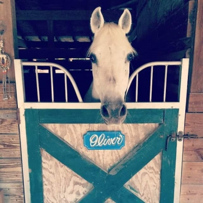 Awesome energetic trail horse for lease
