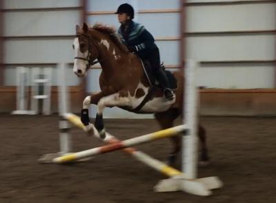 Paint Gelding for Lease