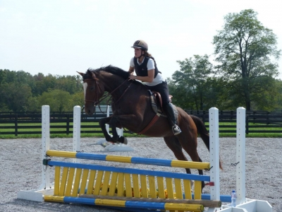 Versatile and Athletic OTTB Mare