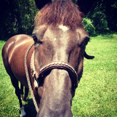 Horse for Lease