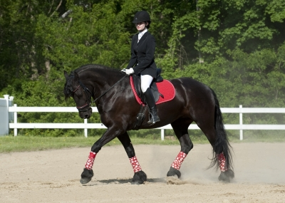 2nd Level Friesian for Half-Lease