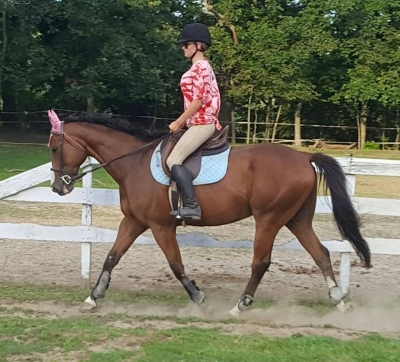 Spectactular Gelding for Lease