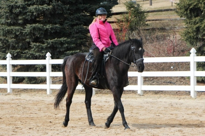 Shareboarder Wanted for SP Andalusian/TB