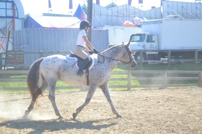Flashy Appaloosa Mare offered for partial 6-12 month lease