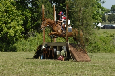 Eventing and Showjumper Schoolmaster