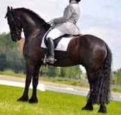 Friesian Gelding For Sale/Lease call/text