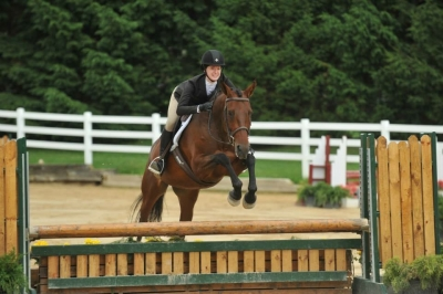 Warmblood Cross for year long lease