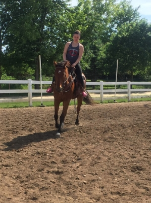 Thoroughbred gelding for onsite lease