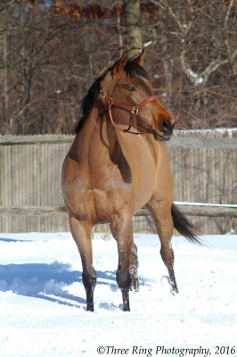 Barbie Beautiful Bay Mare available for half lease