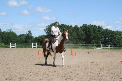 Adorabe gelding for any age any experience!